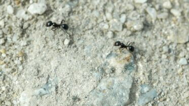 How to Get Rid of Ants | Consumer Reports 30