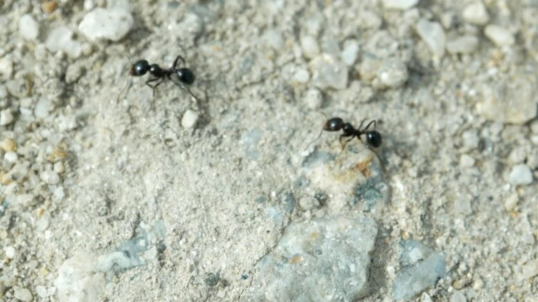 How to Get Rid of Ants | Consumer Reports 1